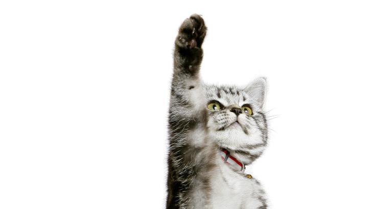 Warum auch Tiere oft Rechtshänder sind