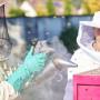 Bei den Forschungsbienen: Die Wolke aus dem Smoker, der Rauchmaschine der Imker, beruhigt die Bienen. – René Ruis