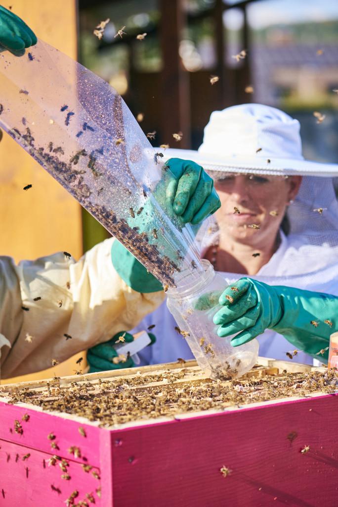 Die Bienenforscherin Verena Christen sammelt die Tiere aus dem Versuchsbienenstand. - René Ruis