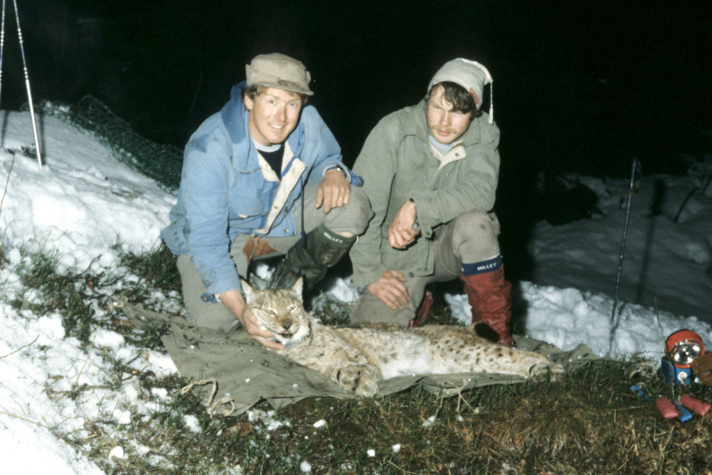Urs Breitenmoser (rechts) und sein Kollege Heinrich Haller gaben 1984 dem betäubten Luchs Neni ein Senderhalsband mit. Urs Breitenmoser